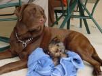 Cody and Tug - Lazy dayz